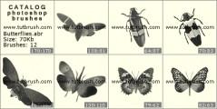 Метелики і жуки - прев`ю кисті фотошоп