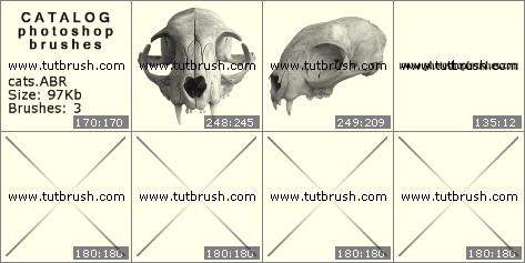 Photoshop brushes Skull cat