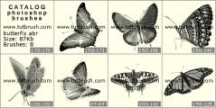 Beautiful Butterflies - photoshop brush preview
