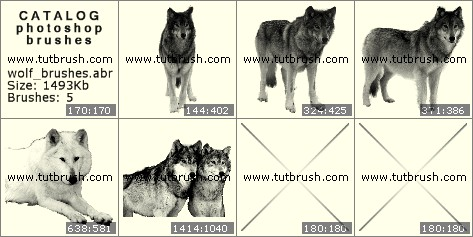 Кисти для фотошопа Волк