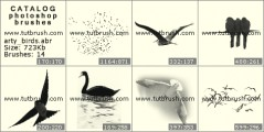 Pictures of birds - photoshop brush preview