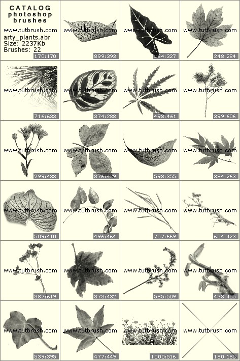 Photoshop brushes Leaves of plants