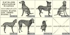 Породистый пес - превью кисти фотошоп