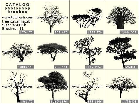 Photoshop brushes Savanna trees