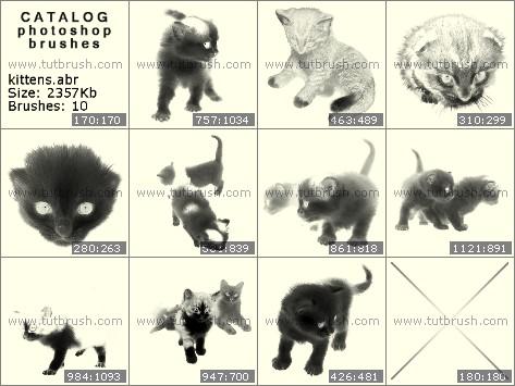 Кисти для фотошопа котенок