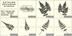 Fern Leaves - photoshop brush preview