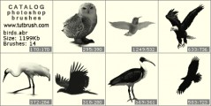 Birds in nature - photoshop brush preview