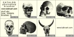 Skull - photoshop brush preview