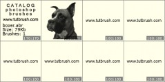 Boxer Breed - photoshop brush preview