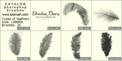 Types of feathers - photoshop brush preview