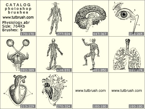 Кисти для фотошопа Физиология