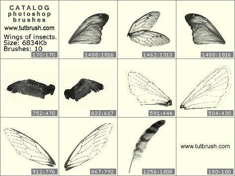 Кисти для фотошопа Крылья насекомых