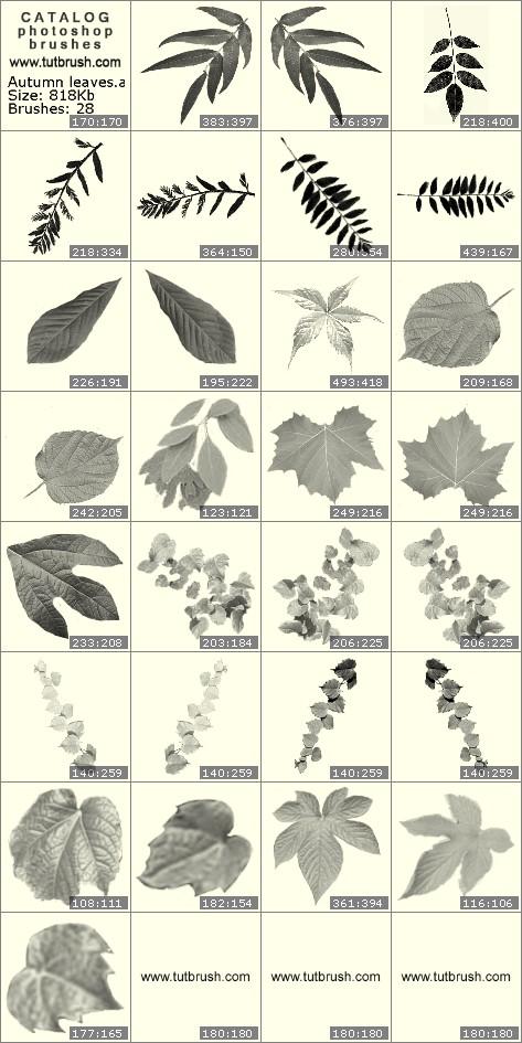 Кисти для фотошопа Осенние листья