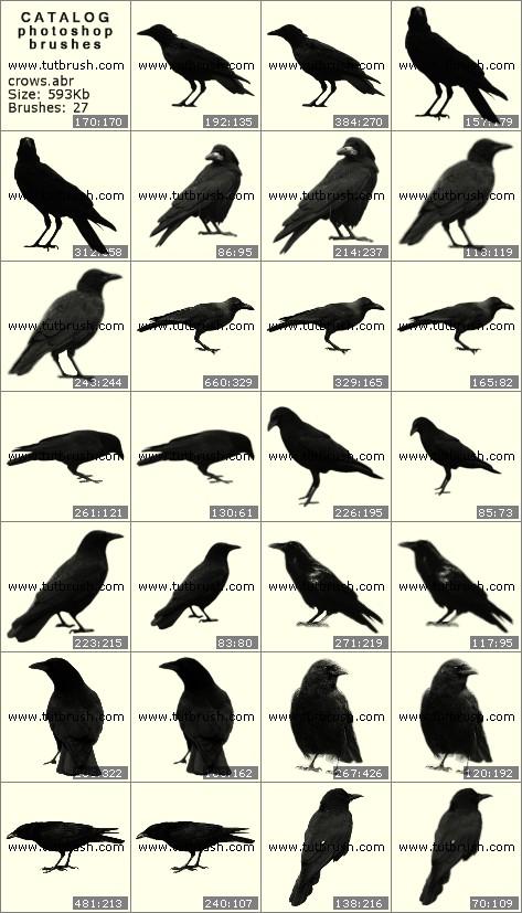 Photoshop brushes Crows