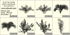 Shrub - photoshop brush preview