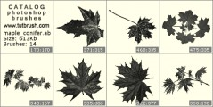 Maple leaves and pine - photoshop brush preview