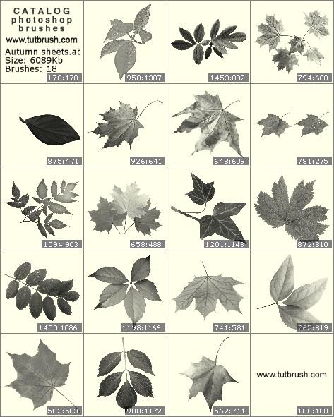 Photoshop brushes Autumn leaves