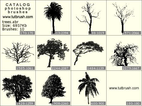 Photoshop brushes Tropical trees
