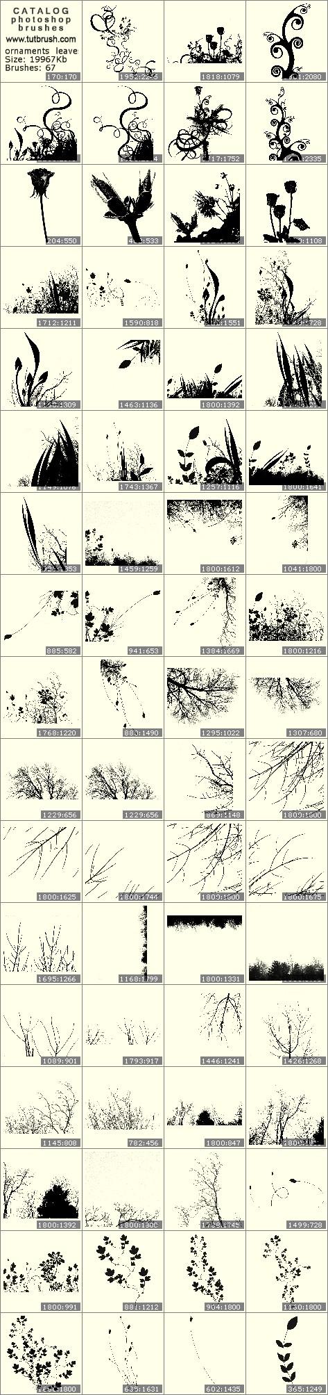 Кисти для фотошопа орнаменты из листьев