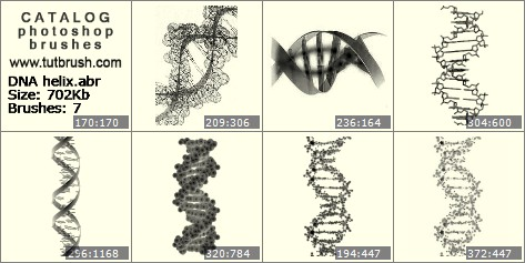 Photoshop brushes DNA helix