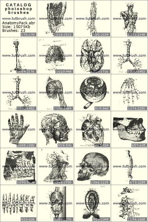 Кисти фотошоп Анатомия органов человека