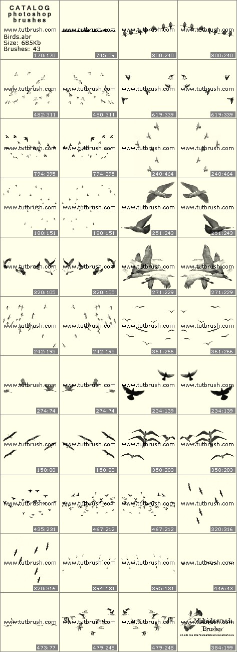 Photoshop brushes Flock of birds