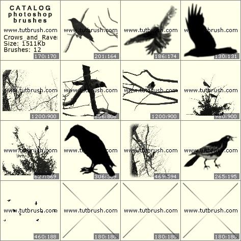 Кисти фотошоп вороны в природе