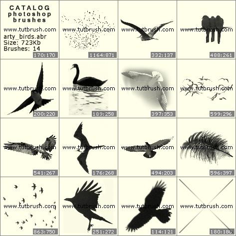 Щітки фотошоп зображення птахів