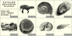 Скам`янілості ракушок
