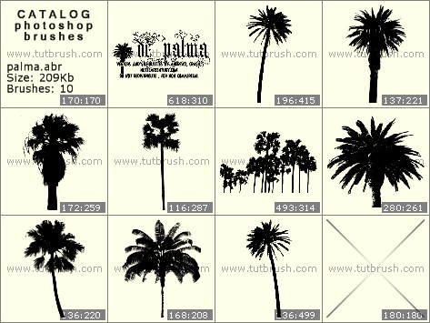 Photoshop Brushes Coconut Tree