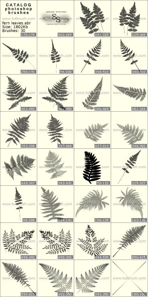 Кисти фотошоп Листья папоротника