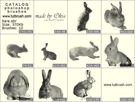 Photoshop brushes Hare