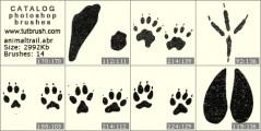 Следы животных на поверхности