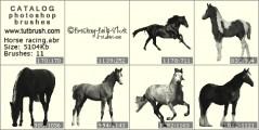 Лошади беговые