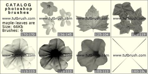 Кисти фотошоп Кленовые листочки и цветочки
