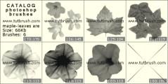 Кленовые листочки и цветочки