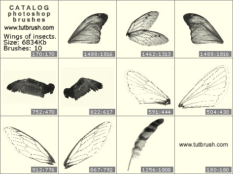 Photoshop brushes The wings of insects