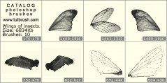 The wings of insects