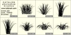 The Bush grass