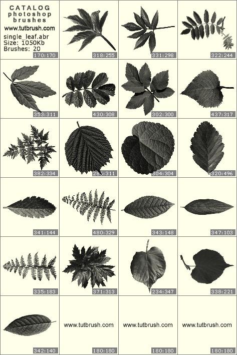 Кисти фотошоп Листьев растений и деревьев