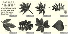 Листьев растений и деревьев