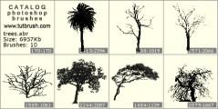 Тропічні дерева